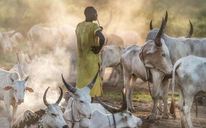 Transhumance au Togo